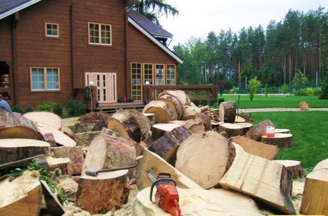 Сколько стоит спилить дерево?