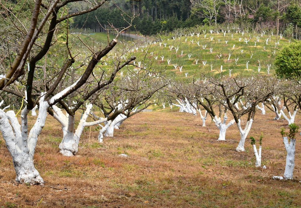 Время года для подрезки деревьев